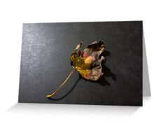 Fallen leaf in fall Greeting Card