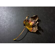 Fallen leaf in fall Photographic Print