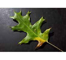 Fallen green leaf Photographic Print