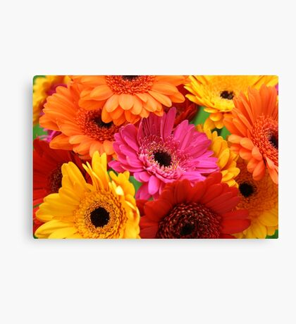 Brightly coloured gerbera Canvas Print