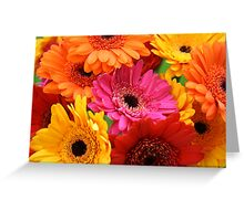 Brightly coloured gerbera Greeting Card
