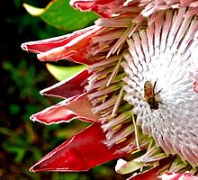 The Bees Knees by shoot2print