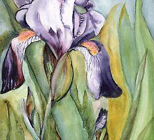 Blue Iris in Full bloom by Marsha Woods