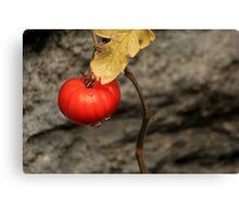 Like A Tomato In The Rain ... Canvas Print