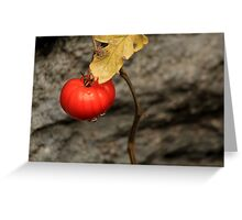 Like A Tomato In The Rain ... Greeting Card