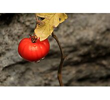 Like A Tomato In The Rain ... Photographic Print
