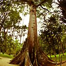 Huge Tree by petitejardim