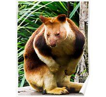 Tree Kangaroo Poster