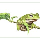 Green tree frog (colour) by Laura Grogan