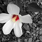 White Dream by Mechelep