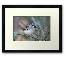 Spotted Pardalote Framed Print