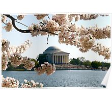 Cherry Blossoms and Jefferson Memorial  Poster