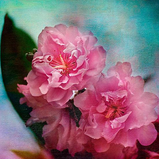 Peach blossoms by Celeste Mookherjee