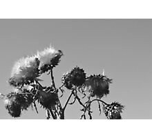 Withering Flower Photographic Print