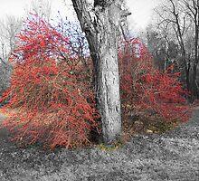 Redbud Tree by Wayne George