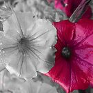 Petunia Dream by Mechelep