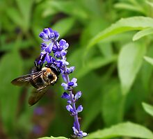 Bumble Bee on Purple Flower by Michael L. Colwell
