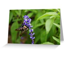 Bumble Bee on Purple Flower Greeting Card