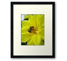 furry bee Framed Print