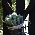 Cactus Gate by Catherine Davis
