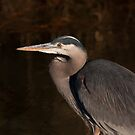 Great Blue Heron by Aler