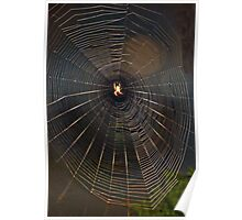Spider In The Spotlight Poster