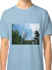 Leafless tree of acacia Classic T-Shirt