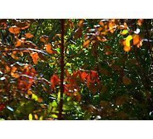 Red Autumn Leaves Photographic Print