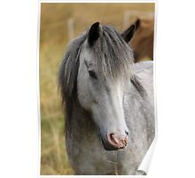 Grey Horse Poster