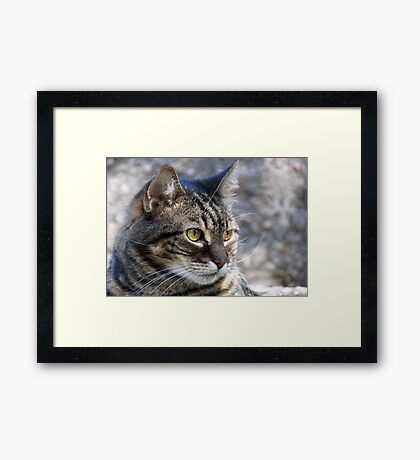 Lily, the senior house cat Framed Print