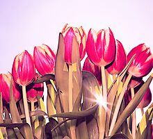 Tulips with sky by Krisztian Sipos