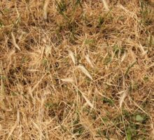 Dry grass in a meadow Sticker