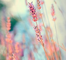 Lavender with life by Krisztian Sipos
