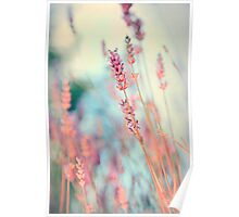 Lavender with life Poster