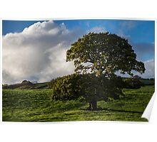Devon Countryside Poster