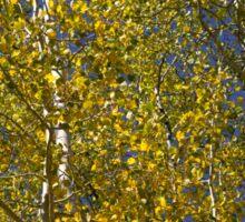 Golden Rays of Sun Sticker