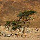 Gaffer Tree by Helen Shippey