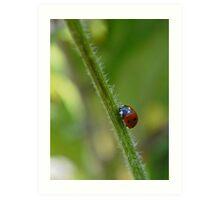 Ladybird on a stem Art Print