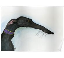 A Little Crooked Nose - Greyhound Art Poster