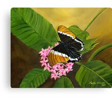 Rusty-tipped Butterfly Canvas Print