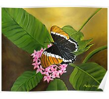 Rusty-tipped Butterfly Poster