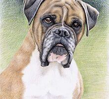 Portrait Boxer Hutch by Nicole Zeug