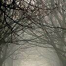 Branches meeting through the fog by Esther  Moliné