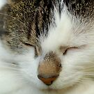 I am Only Sleeping II - Milli by vbk70