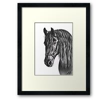 Black Pearl - Friesian Stallion Framed Print