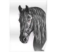 Black Pearl - Friesian Stallion Poster