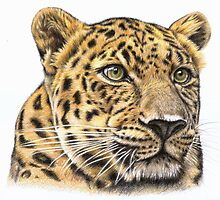 The Leopard by Nicole Zeug