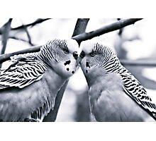 Love Birds I Photographic Print