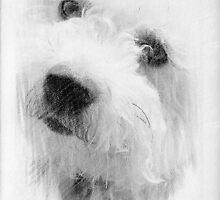 Please pet me...Little Lily © by Dawn M. Becker