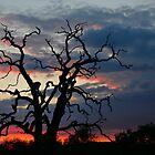 Tree of Silhouette  by Neil  Pickin